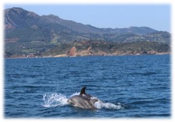 delfino2